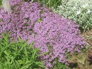 травы входящие в состав лекарства стоматофит