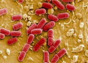 инфекционная составляющая запаха ацетона