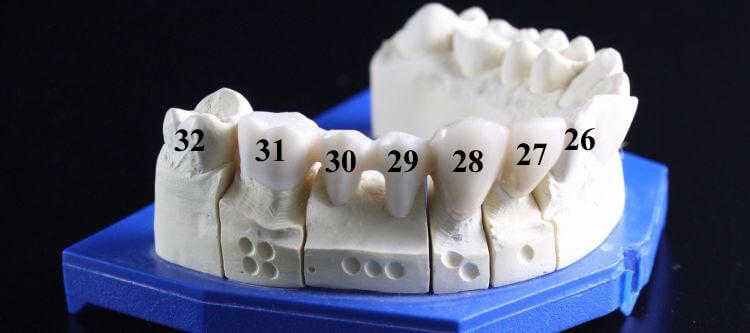 нумерация зубов в стоматологии разные схемы