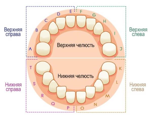 Универсальная система нумерации временных зубов