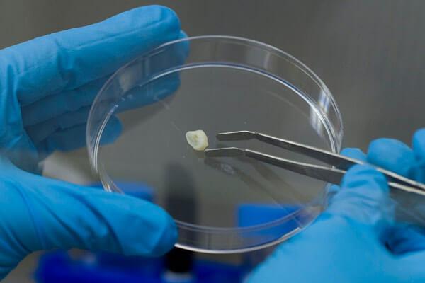 новая технология выращивания зубов