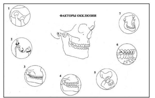 Методы определения центральной окклюзии и центрального соотношения челюстей